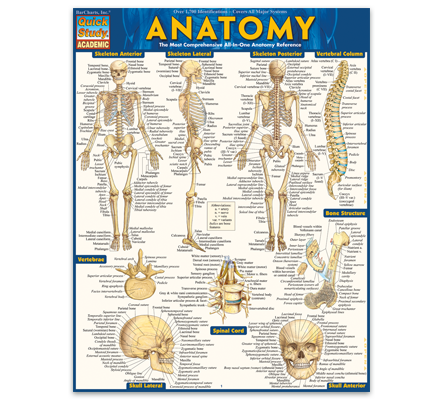 Quickstudy the worlds number one quick reference publisher anatomy fandeluxe Image collections