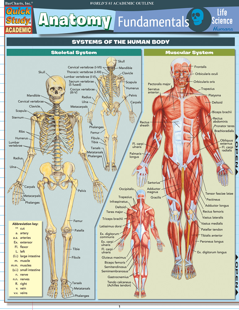 Anatomy-Fundamentals