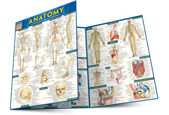 anatomy-open