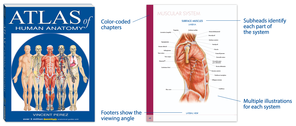 clinical atlas of human anatomy
