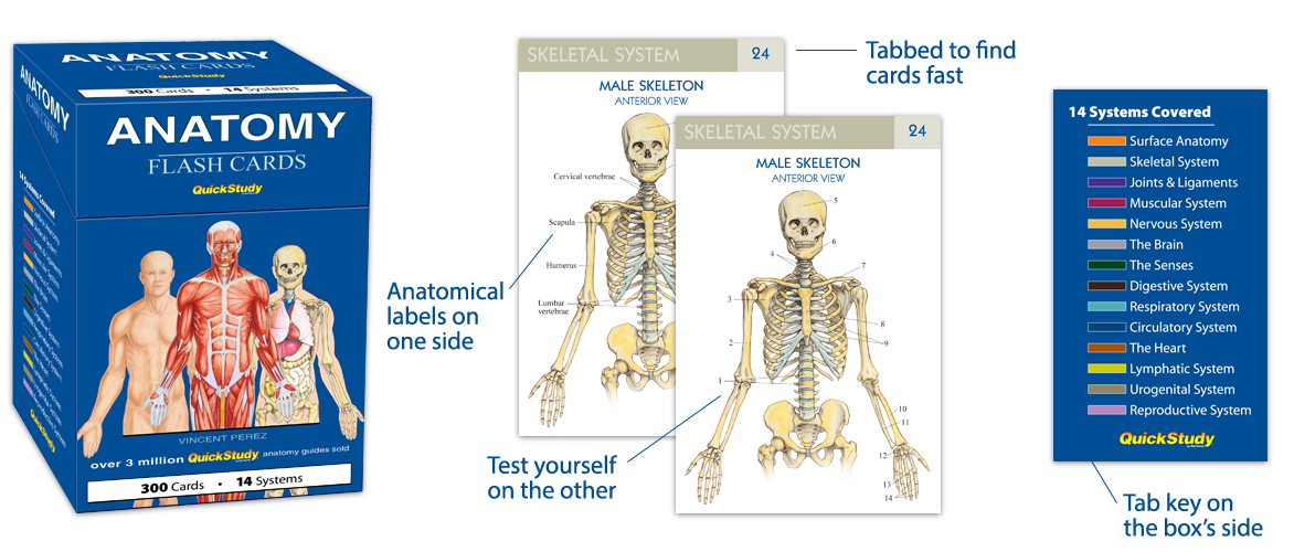Anatomy Vocabulary Flash Cards Quickstudy
