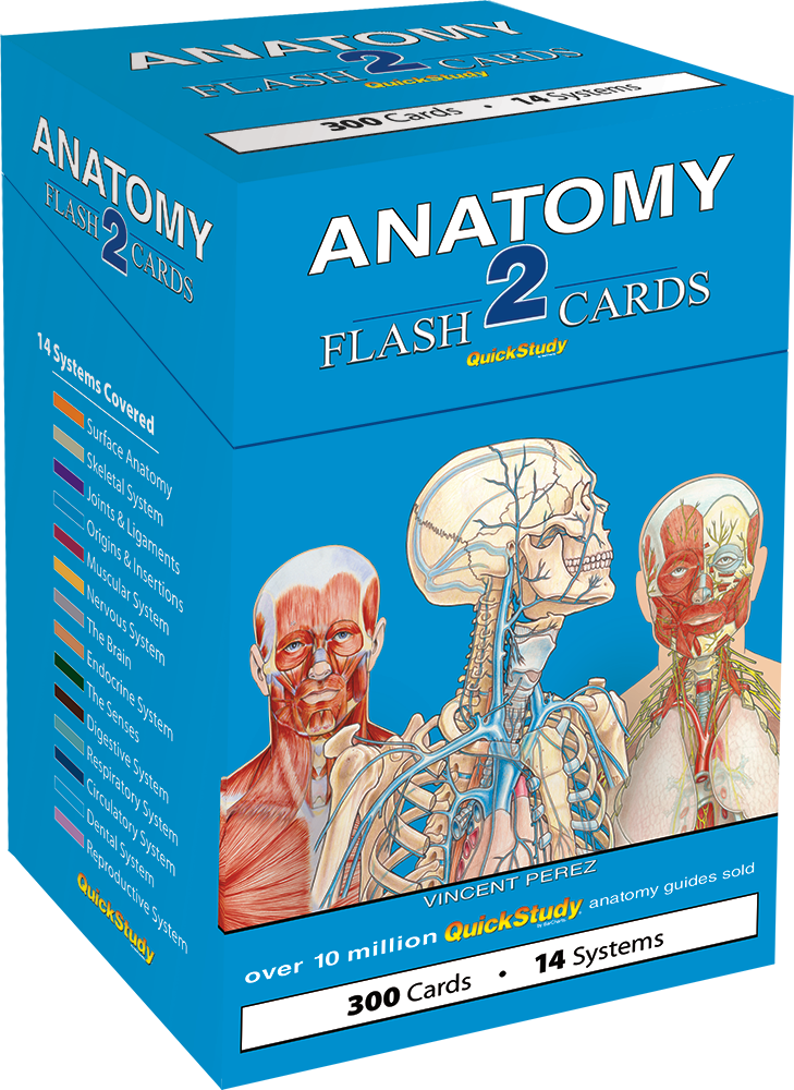 Anatomy 2 Flash Cards