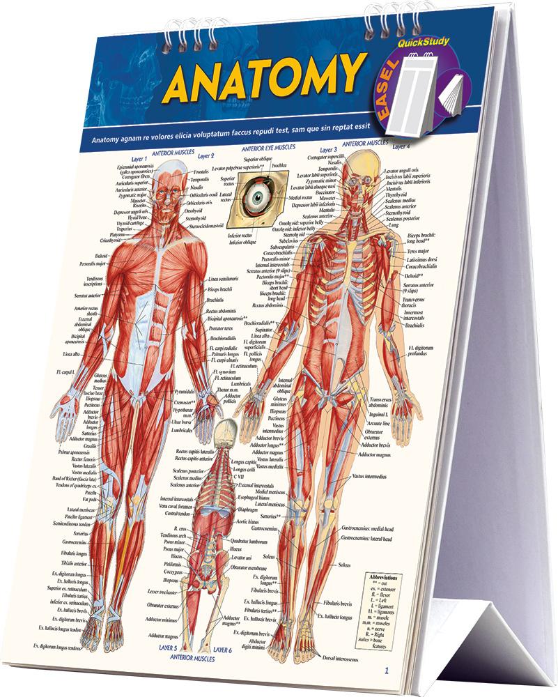 Anatomy Easel
